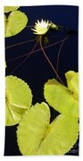 Lily Pads And Lotus Blossom Beach Towel