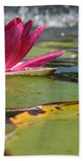 Lily Pads And Petals Beach Towel