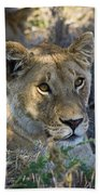 Lioness With Pride In Shade Beach Towel