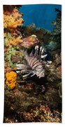 Lionfish, Fiji Beach Towel