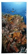 Lionfish, Indonesia Beach Towel