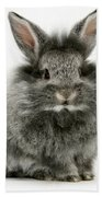 Lionhead Rabbit Beach Towel