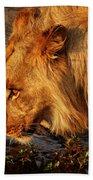 Lion's Pride Beach Towel