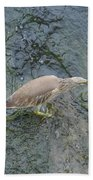 Little Bittern Beach Towel
