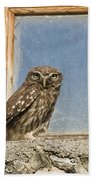 Little Owl Athene Noctua On Window Beach Towel