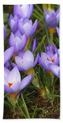 Little Purple Crocuses Beach Towel