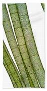 Lm Of Tubular Algae Beach Towel