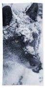 Lone Wolf In Snow Beach Towel