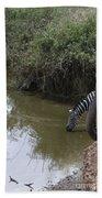 Lone Zebra At The Drinking Hole Beach Towel