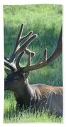 Lounging Elk Beach Towel