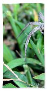 Lurking Spider In The Grass Beach Towel