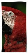 Macaw In Red Beach Towel