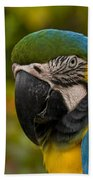Macaw Parrot Stare Down Beach Towel