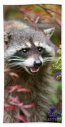 Mad Raccoon Beach Towel