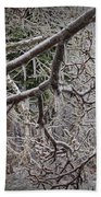 Magnolia Tree Branches Covered With Ice No.3834 Beach Towel