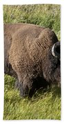 Male Bison Grazing  Beach Towel