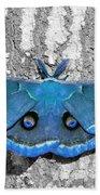 Male Moth Light Blue Beach Towel