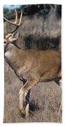 Male White-tailed Deer Beach Towel
