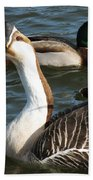 Mallard And Chinese Swan Goose - Anser Cygnoides - Featured In Wildlife Group Beach Towel