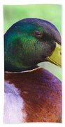 Mallard Drake In Shade Beach Towel