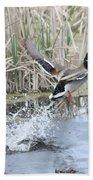 Mallard Duck Flying Beach Towel