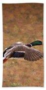 Mallard Duck In Flight Beach Towel
