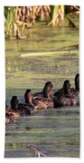 Mallard Ducks In A Row Beach Towel