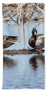 Mallard Ducks Sitting On A Sandbar  Beach Towel
