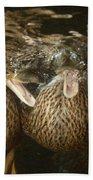 Mallard Ducks Underwater Beach Towel
