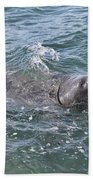 Manatee At Ponce Inlet Beach Towel