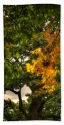 Maple In Oak Grove Beach Towel