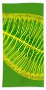 Marine Diatom Podocystis Spathulata Beach Towel
