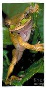 Masked Treefrog Beach Towel