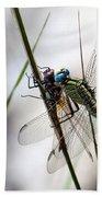 Mating Dragonflies  Beach Towel