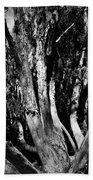 Melaleuca Tree Beach Towel