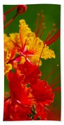 Mexican Bird Of Paradise Beach Towel