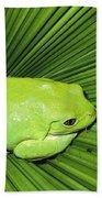 Mexican Giant Tree Frog Pachymedusa Beach Towel