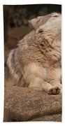 Mexican Wolf Howling Beach Towel