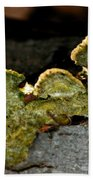 Michigan Jade Fungus Beach Towel