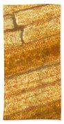 Micrograph Of A Goldfish Tail Beach Towel