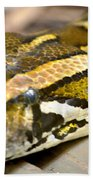 Mighty Python Beach Towel