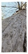 Mighty Tree And The Bark Beetle Beach Towel