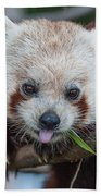 Mischievious Red Panda Beach Towel