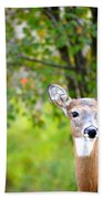 Mom And Baby Deer Beach Towel