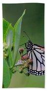Monarch On Milkweed Beach Towel