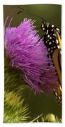 Monarch On Thistle 2 Beach Towel