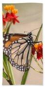 Monarch Portrait Beach Towel