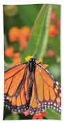 Monarch Sipping Beach Towel