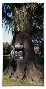 Money Tree . 7d9817 Beach Towel