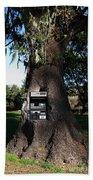 Money Tree . 7d9817 Beach Sheet